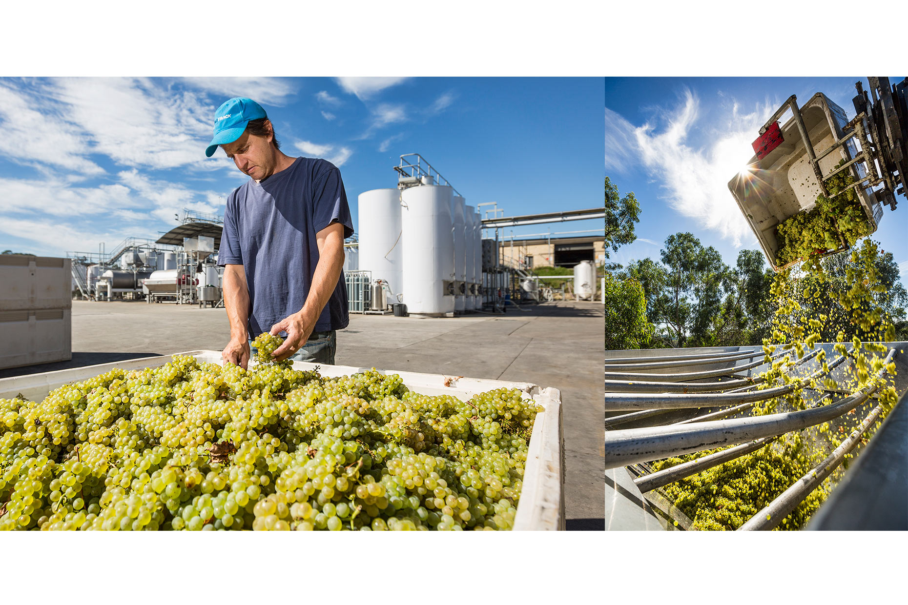 Industrial Photographer Melbourne | Rob Dolan Winery | Michael Evans Photographer